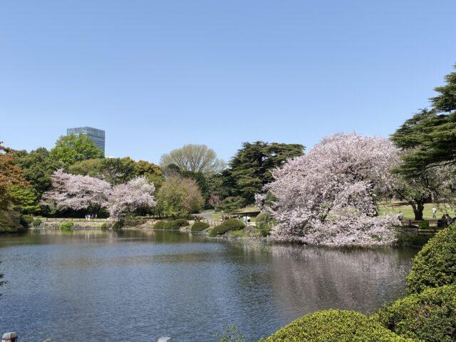♪桜〜さくら〜